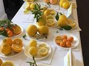 Citrus Quite Reincarnated