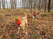 Safe Hiking During Hunting Season