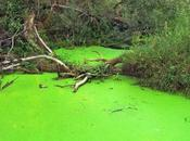 Causes, Effects Solutions Algal Bloom Aquatic Ecosystems