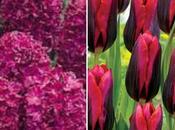 Adding Colour Beds Borders Planting Flowerbulbs
