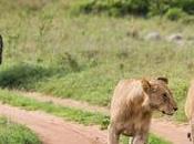 Incredible African Serengeti: Safari State Mind