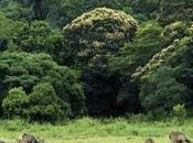 Need Have Kerala Your Travel Bucket List