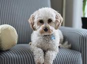 Keep Small Home Shared With Animal Companion Always Organized