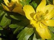 Best Plants Flowers Winter Garden Colour