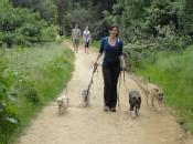 Walk Your Dog/Dog Walking Tips