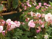 Garden Bloggers' Bloom 2011