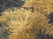 Plant Week: Trachycarpus Fortunei