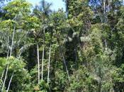 News Rainforest