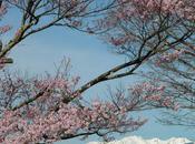Cherry Blossom FOTD Part