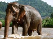 Elephant Paradise Chiang
