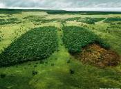 World Environment Australian Forest Regeneration