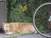 Still Exhausted from Hour Bike Ride Yesterday....