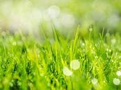 Safely Pesticides Your Lawn