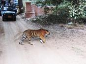 Spot Tigers Most Popular National Parks India