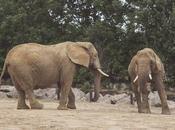 Some Elephant Love