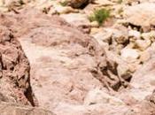 Mike Wardian Attempting Record Israel National Trail, Shvil Yisrael
