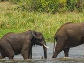 Animals Spotted Murchison Falls National Park, Uganda