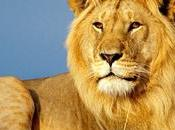 Interesting Facts About Asiatic Lions National Park