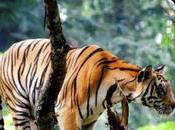Amazing Tips Wildlife Photography