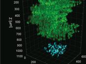 Microscopy Technique Sees Thousands Cells Their Activity Deep Brain