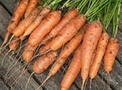 Protecting Carrots with Enviromesh