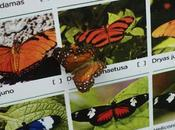 Butterfly House Sicily