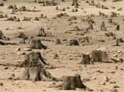 Increasing Human Population Density Drives Environmental Degradation Africa