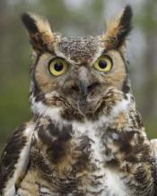 Facts Probably Didn't Know About Owls (video)