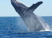 Japan Starts Commercial Whaling Again After Long Years