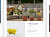 Best Small Business WordPress Themes