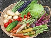 Benefits Colourful Harvest