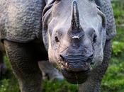 Kaziranga National Park Treasure House Rich Indian Wildlife
