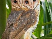 Photographing Owls Andaman