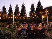 Sunset Vineyard Dinner with Creek