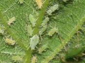 Collectivism Cannabis