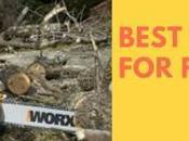 Best Chainsaw Firewood 2019