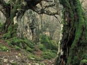 Flora Apennine-Lucan Park, Extraordinarily Rich Nature.