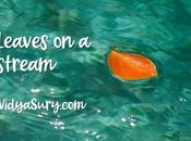 Leaves Stream Exercise