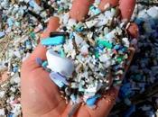 Tiny Loggerhead Turtle Succumbs Death Ingesting Pieces Plastic