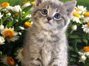 Beauty Beasts: Animals Love Flowers