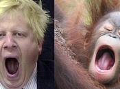 Boris Johnson: London's First Mayor Look (almost Exactly) Like Orangutan