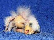 'Germany's Ugliest Parrot' Leipzig Zoo's Newest Animal Celebrity