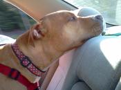Doggie Dash!!