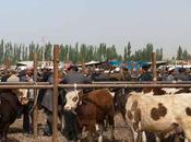Kashgar, Livestock Market, China