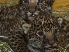 U.S. Zoos Celebrate Rare Births This Spring