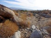 FALL TRIP DESERT: Anza Borrego State Park, California