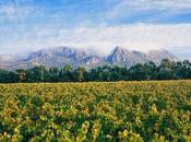 Taste Vine Wine Experiences South Africa
