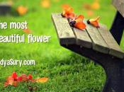 Most Beautiful Flower Inspiring Poem