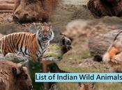 Best Known Unique Wild Animals India