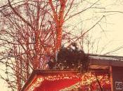 Nessascityblog Winter Holiday Post